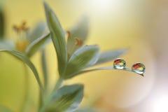 Härliga blommor reflekterade i vattnet, konstnärligt begrepp Stillsamt abstrakt closeupkonstfotografi Blom- fantasidesign Royaltyfria Bilder