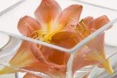 härliga blommor som är glass inom vasen Arkivbilder