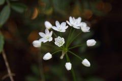 Härliga blommor som blommar i trädgården, Arkivbilder