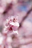 Härliga blommor som blommar i vår Arkivfoto