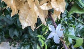 Härliga blommor som blommar på väggen av garden_IIen arkivbilder