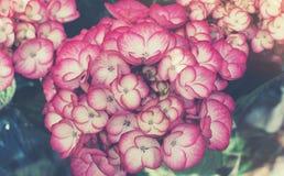Härliga blommor som göras med färgfilter Royaltyfri Foto