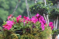 Härliga blommor som hänger i blommautställning i trädgård Royaltyfri Bild