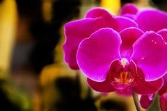 Härliga blommor under Sanya, Kina Arkivbilder