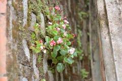 Härliga blommor växer i väggen i Dalat, Vietnam Royaltyfria Foton
