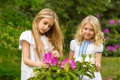 Härliga blonda flickor Royaltyfri Fotografi