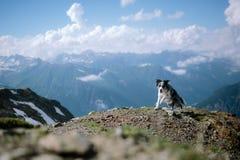 Härliga border collie som kör på ett berg mot himlen och molnen royaltyfria bilder