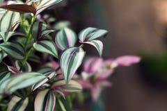 Härliga broschyrer i en botanisk trädgård Arkivbilder