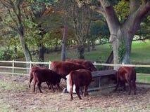 Härliga bruna landskor i kant av fältslutet upp hösten da Royaltyfria Bilder
