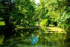 Härliga bugat vatten för landskap träd Arkivbild