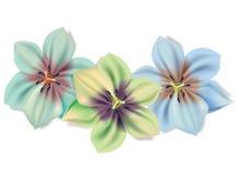 härliga bukettblommor Vektorsommarblommor som isoleras på vit bakgrund Blomning för blommadesign Liljor in royaltyfri illustrationer