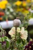 härliga buketter från blommor och örter Arkivbild