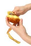 härliga clean händer skalade kvinnor för potatisar s Royaltyfri Fotografi