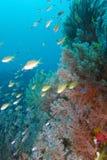 Härliga Coral Reef Life av fältprästen Burgos, Leyte, Filippinerna Royaltyfri Fotografi
