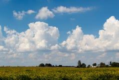 Härliga cumulous moln i en blå himmel över lantligt Illinois lantgårdland royaltyfri foto