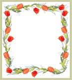 härliga dekorativa tulpan för ramlilja o Arkivbild