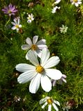 härliga delikata blommor Royaltyfri Fotografi