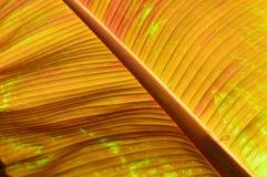 Härliga detaljer i en tropisk regnskog gömma i handflatan ormbunksbladet arkivfoton