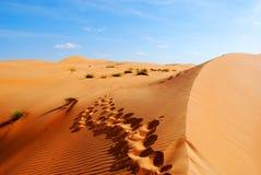 Härliga dyn i omansk öken Arkivbild
