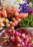 härliga Europa blommor kan viciifoliaen för springtime för salviaen för naturonobrychispratensisen royaltyfri foto