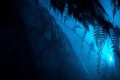 Härliga exotiska sidor i en tropisk skog med ett blått ljus som nära skiner royaltyfri fotografi