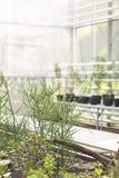 Härliga exotiska växter i botaniskt växthus arkivbilder