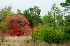 Härliga färger av hösten i en blandad skog Royaltyfri Fotografi