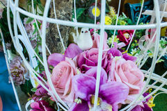Härliga färger av rosa plast- Arkivbild