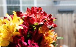 Härliga färgglade blommor som används för garnering Royaltyfria Foton