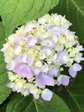 härliga färgrika blommor Fotografering för Bildbyråer
