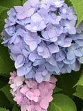 härliga färgrika blommor Arkivbilder