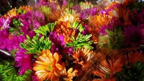 härliga färgrika blommor royaltyfri fotografi