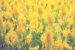 härliga färgrika blommor Arkivbild