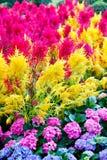 härliga färgrika blommor Royaltyfri Bild