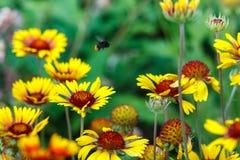 Härliga färgrika blommor i trädgården Arkivfoton