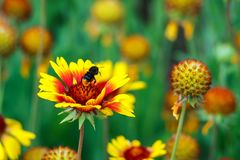 Härliga färgrika blommor i trädgården Royaltyfri Foto
