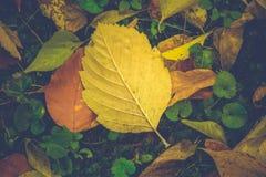 Härliga färgrika höstblad på jordningen arkivfoto
