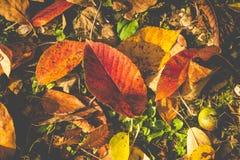Härliga färgrika höstblad på jordningen Arkivbild