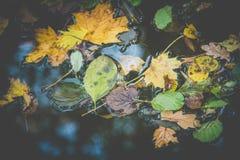 Härliga färgrika höstblad på vattnet Fotografering för Bildbyråer