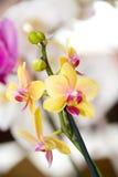 härliga färgrika orchids Arkivfoton