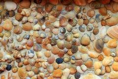 Härliga färgrika snäckskal samlade på kusten av Black Sea Royaltyfri Foto