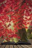 Härliga färgrika vibrerande röda och gula träd för japansk lönn i den på engelska detaljen för landskap för Autumn Fall skogskogs arkivfoton