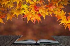 Härliga färgrika vibrerande röda och gula träd för japansk lönn i den på engelska detaljen för landskap för Autumn Fall skogskogs fotografering för bildbyråer