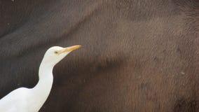 Härliga fåglar Arkivbild