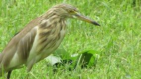 Härliga fåglar Royaltyfri Bild