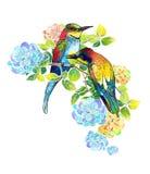 Härliga fåglar för vattenfärg och delikata blommor Arkivfoton