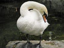 Härliga fåglar i världen av naturen royaltyfri bild
