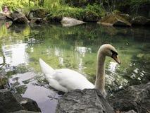 Härliga fåglar i världen av naturen royaltyfria foton