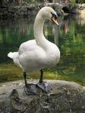 Härliga fåglar i världen av naturen arkivfoton
