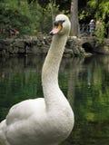 Härliga fåglar i världen av naturen arkivbilder